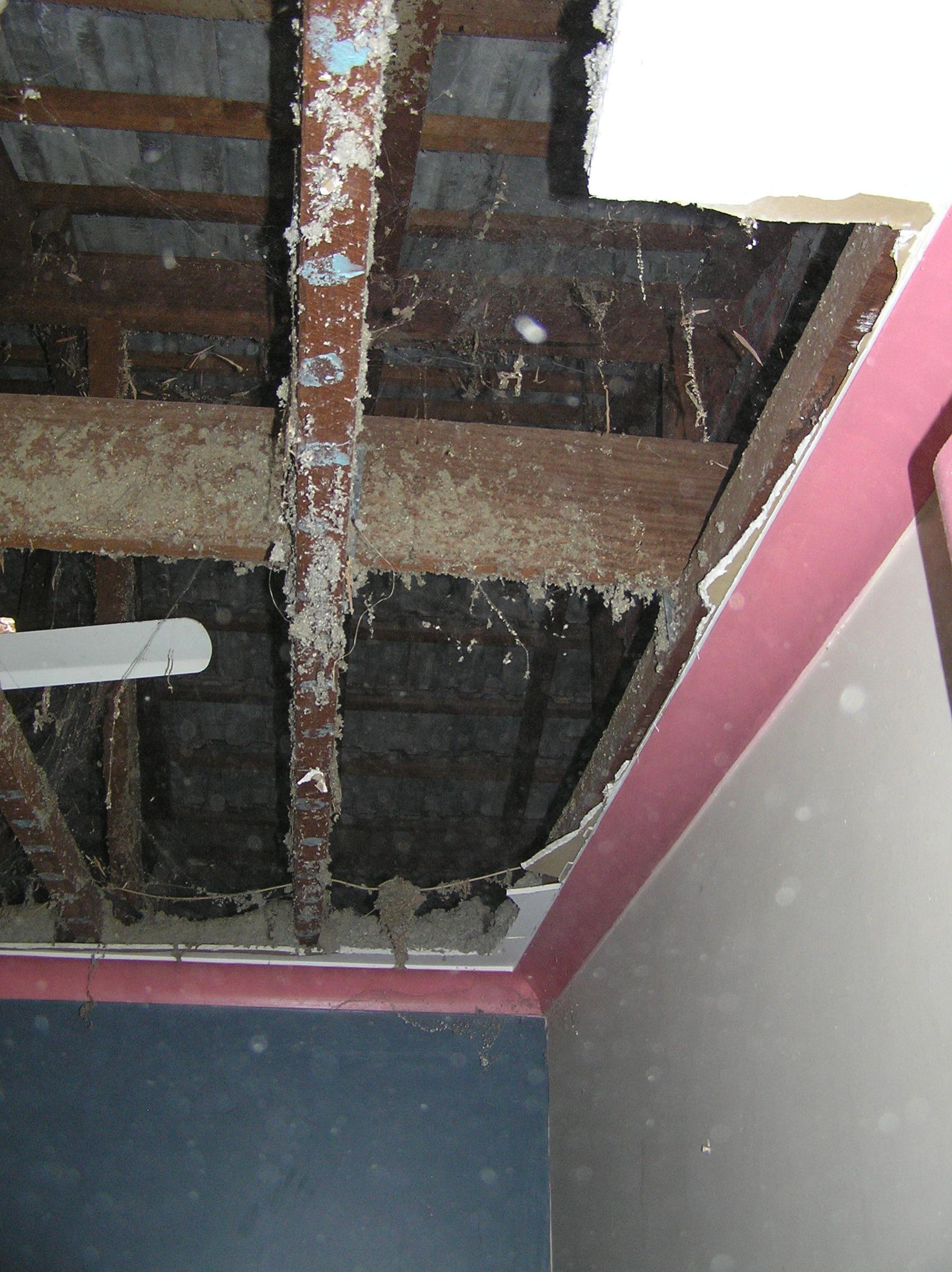 Maidavale – Fallen Ceiling